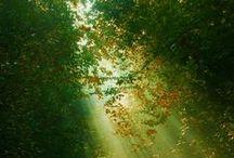 Δέντρα-η ανάσα της Γης!Trees-earth's breath!!! / Forests !!!!!