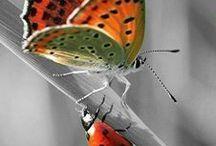ΤΑ ΔΥΟ Π!!!!!! Πεταλούδες- Πασχαλίτσες! / Βutterfly  and........ Ladybug!!