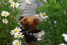 ΖΩΑ  και πουλιά σε όμορφες στιγμές! / Cute animals! / Όλα τα ζώα του πλανήτη Γη!
