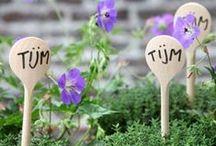 (Moes)tuin / Moestuin DIY