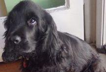 I   LOVE   DOGS!!!! / Όμορφες εικόνες με σκυλάκια!!