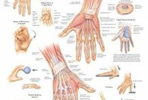 Hand Therapy / Valuable information for those who want to maximize the mobility, health and wellness of their hands and, as a result, their lives.