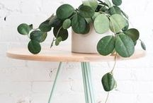 home: pretty plants