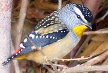 Tweet Little Birdies