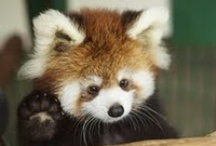 Cute Little Critters