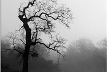 Black & White / by Shannan Simon