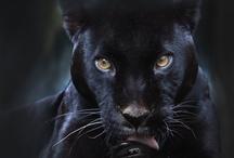 Black Passion / by Andrea Williams