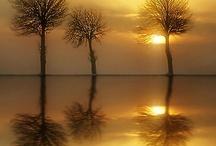 REFLECTIVE FX