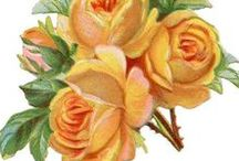 Graphics: Roses