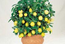Indoor plants/Szobanövény