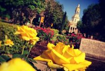 All for the Green and Gold / Sic em Bears! / by Coretta Latrice