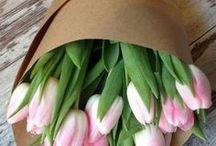 S P R I N G / Spring