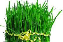 Nowruz holiday / Novruz bayramı. Bahar bayramı. Holiday nowruz. Nevruz