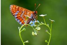 Butterflies / by Anna-Luise Croukamp