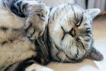 Cats / Funny and cute kitties. Котэ!