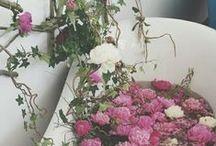 Vår. // Blome.