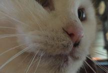 Japanese Cat❤️Mii / Japanese Cat