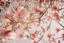 inspire us | botanica