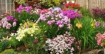 Garden-Сад / что и как растет