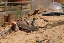 Meerkat Burrows