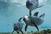 Aquatic Mammals & Marsupials