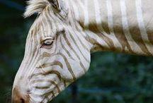 Albino   Animal