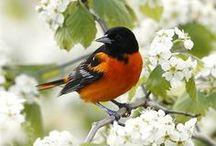 Flying Beauties   Birds