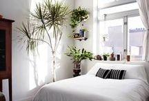 Nature Green   Home