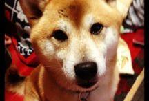 My dog Goqoo