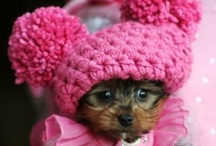 Awwww...So Cute!!! / by Darlene Brown