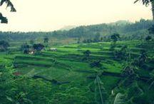 Green  / green valley