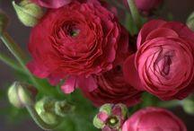 Flores y jardines / Decoración de jardines y arreglos florales