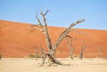 Travel Namibia / Reisetipps für einen Roadtrip durch Vietnam Nationalparks, Reiseblog, Städtetrips, Afrika, Safari,