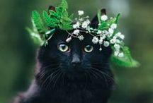 Cutest Animals ❤