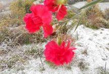 Neve sull'Appennino / Immagini dell'Appennino Piacentino durante le nevicate dell'inverno 2012/13