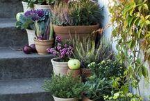 *outdoors* / cela est bien, repondit Candide, mais il faut cultiver notre jardin