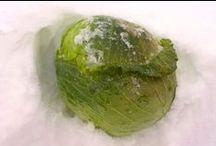 旬の青果 : 葉菜類 / 丸友中部青果の「旬の青果」に登録してある「葉菜類」の一覧です。