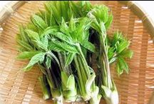 旬の青果 : 山菜類 / 丸友中部青果 「旬の青果」に登録してある「山菜類」の一覧です。