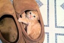 Adorable Felines / Adorable or hilarious cat memes and gifs.