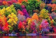 Fall Color Destinations / We cannot get enough of FALL COLOR!