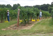 Wineries in LaSalle County