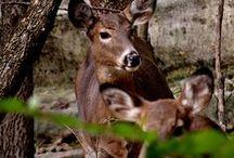 Wildlife in LaSalle County