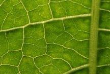 PERFECT BEAUTY CERA NACZYNKOWA / Skóra jest  często cienka i delikatna. Naczynia krwionośne, zwykle płytko położone, szybko tracą elastyczność i są kruche. Pod wpływem stresu emocjonalnego, fizycznego (np. zmiany temperatury, promieniowanie słoneczne, wysiłek) czy chemicznego (kawa, alkohol, papierosy, ostre przyprawy) naczyńka rozszerzają się – na zewnątrz widoczne jest to jako rumieńce, uderzenia ciepła.