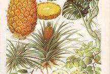 Pineapple mood