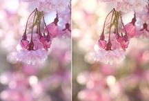 Photography: tutorials