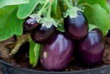 gardening / tips for gardening