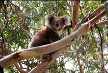 Les Globe-trotters en Australie / Trip en van aux antipodes, à la découverte de la faune, la flore, et des paysages mythiques du pays des kangourous (et du koalas) !