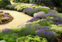 Paisajismo / Jardines: plantas y diseño