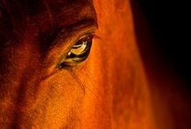 Horses. / I do horse riding, I love horses and I'd like to share this passion with you.