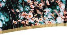 Four Seasons | Spring